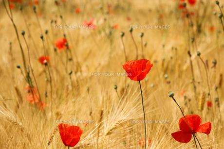 plants_flowersの素材 [FYI00718706]