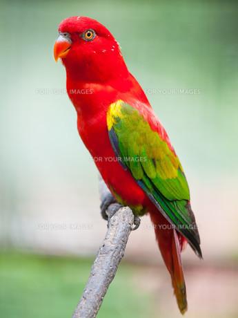 birdsの写真素材 [FYI00719204]