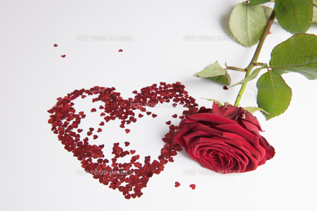 heart and rose for valentine's dayの写真素材 [FYI00720352]