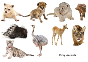 baby animals collectionの写真素材 [FYI00720379]