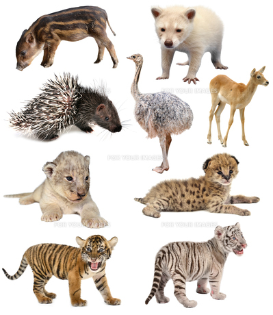 baby animals collectionの写真素材 [FYI00720380]