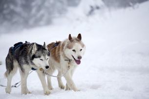 home_animalsの写真素材 [FYI00721132]