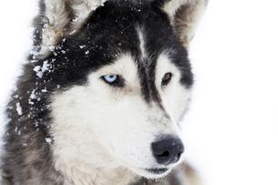 home_animalsの写真素材 [FYI00721144]