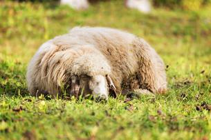 useful_animalsの写真素材 [FYI00723107]