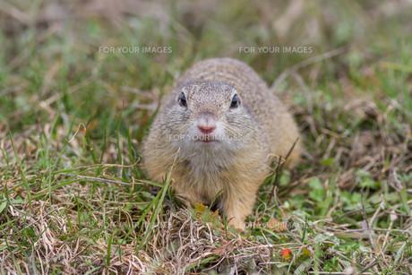 mammalsの写真素材 [FYI00724342]