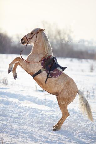 horseの写真素材 [FYI00724526]