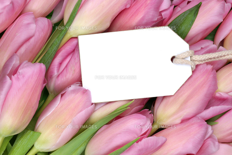 tulip flowers in spring or mothers with empty plate and copy spaceの写真素材 [FYI00725249]