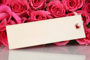 roses flowers for valentine's day or mother's day with map and copy spaceの写真素材 [FYI00725266]