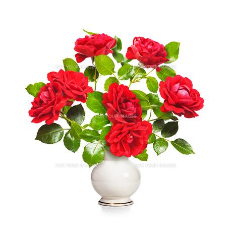 plants_flowersの写真素材 [FYI00725886]