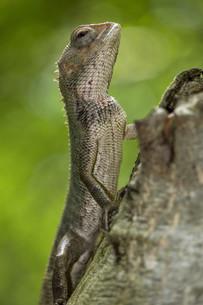 reptiles_amphibiansの素材 [FYI00725911]