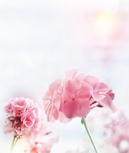 bloomの素材 [FYI00728001]