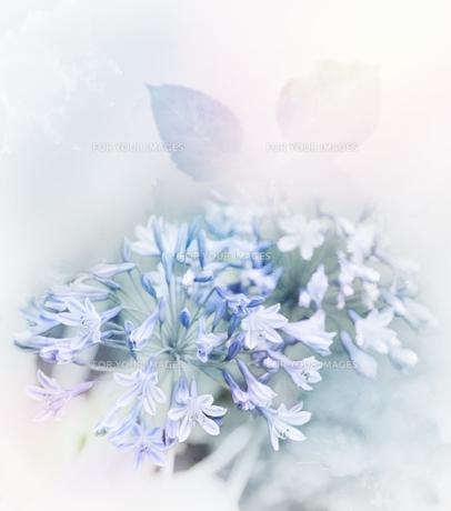 flowerの素材 [FYI00728002]