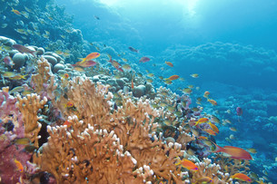 underwater_worldの写真素材 [FYI00728359]