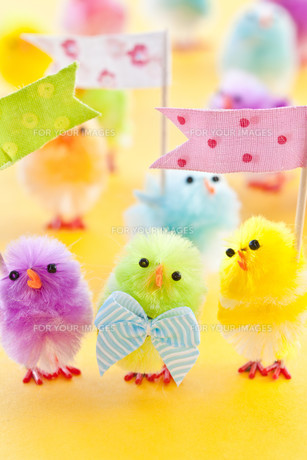 colorful chick for easterの写真素材 [FYI00729148]