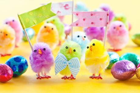colorful chick for easterの写真素材 [FYI00729149]