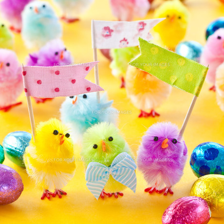 colorful chick for easterの写真素材 [FYI00729151]