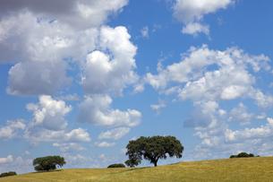 grass_fieldsの写真素材 [FYI00729164]