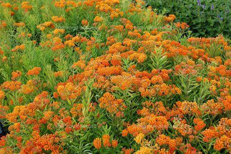 plants_flowersの素材 [FYI00729452]