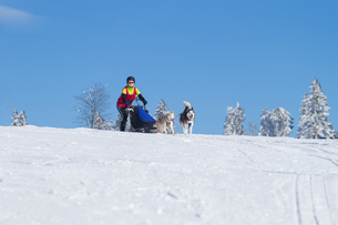 german championship in sled dog races in frauenwald 2015の素材 [FYI00730454]