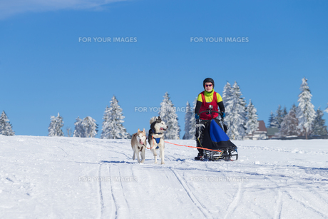 german championship in sled dog races in frauenwald 2015の素材 [FYI00730457]