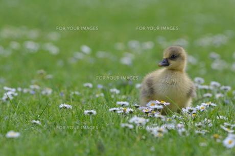 birdsの写真素材 [FYI00734979]