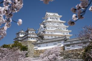 姫路城南面と桜の写真素材 [FYI00735304]