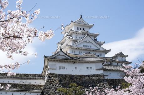 姫路城東面と桜の写真素材 [FYI00735307]