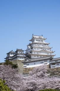姫路城南面と桜の写真素材 [FYI00735308]