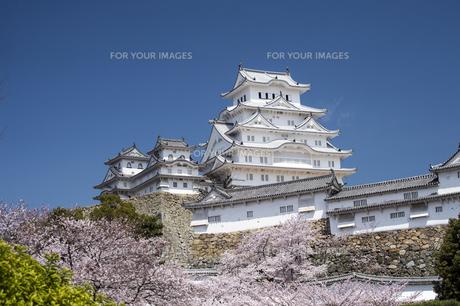 姫路城南面と桜の写真素材 [FYI00735309]