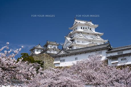 姫路城南面と桜の写真素材 [FYI00735310]