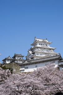 姫路城南面と桜の写真素材 [FYI00735312]
