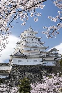 姫路城東面と桜の写真素材 [FYI00735313]