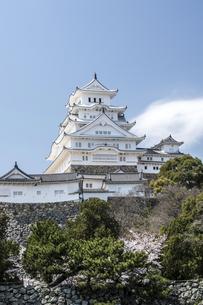 姫路城東面と桜の写真素材 [FYI00735314]