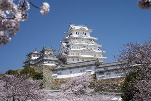 姫路城南面と桜の写真素材 [FYI00735316]