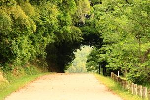 緑のトンネルの写真素材 [FYI00736025]