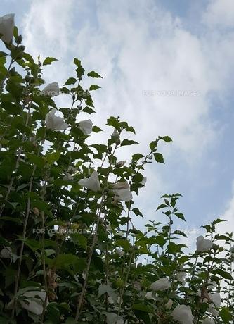 花と空の写真素材 [FYI00736079]