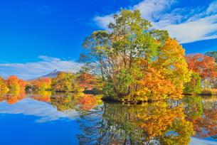 大沼国定公園の秋の写真素材 [FYI00736103]