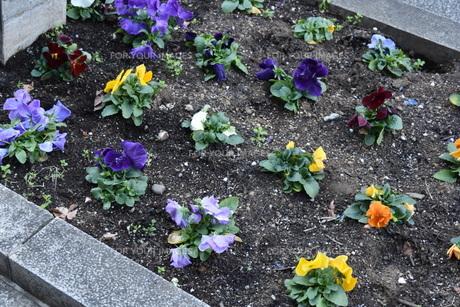 たくさんの小さな花の写真素材 [FYI00736851]