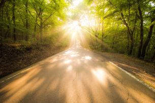 光の道の写真素材 [FYI00737161]