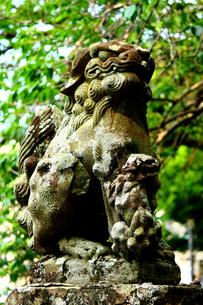 狛犬の写真素材 [FYI00737250]
