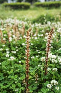 春の雑草の花の写真素材 [FYI00737295]
