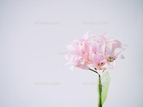 お店の中の素敵な造花の写真素材 [FYI00737497]