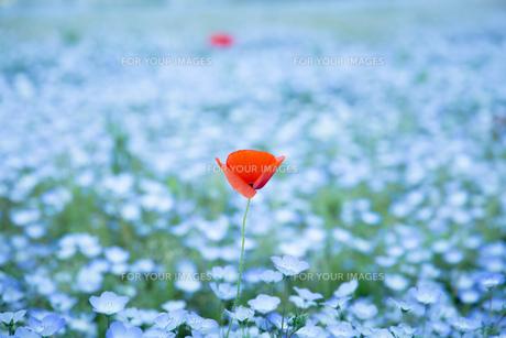 青とオレンジの花の写真素材 [FYI00737503]