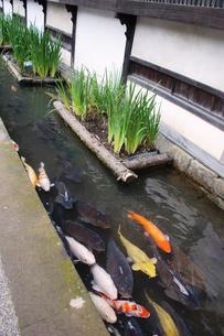 津和野の町並みの写真素材 [FYI00737563]