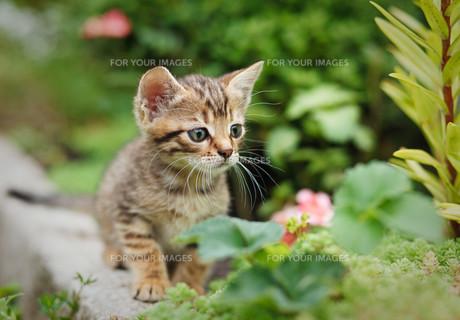 home_animalsの素材 [FYI00740891]
