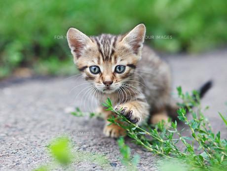 home_animalsの素材 [FYI00740898]
