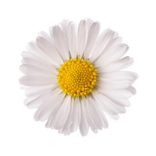 plants_flowersの写真素材 [FYI00740915]