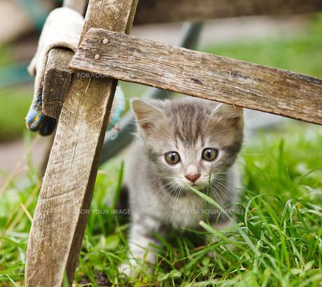 home_animalsの素材 [FYI00740923]