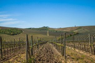 Tuscany Chianti Countrysideの素材 [FYI00741365]