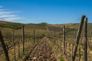 Tuscany Chianti Countrysideの素材 [FYI00741366]